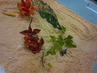 Sand Tray / Sand Play World Tray 1