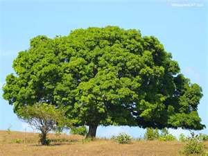 Tree as a symbol of prosperity and the natural gifts of the earth