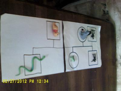 play therapy genogram by Student of Play Therapy 1